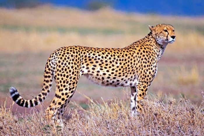 SUD AFRICA E SEYCHELLES OTTOBRE